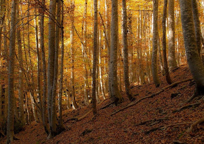 ordesa-otoño
